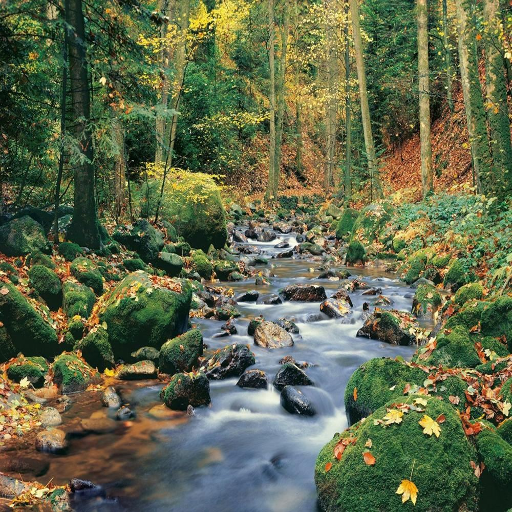 W G Wall Mural Forest Stream Spring Photo Poster Wallpaper Decor Art