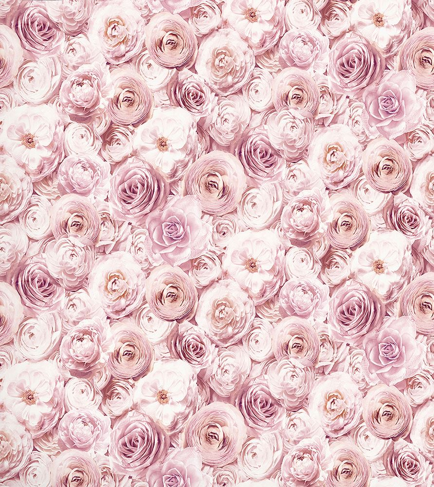 Wild Rose Floral Wallpaper Blush Pink Petals Flowers 3D
