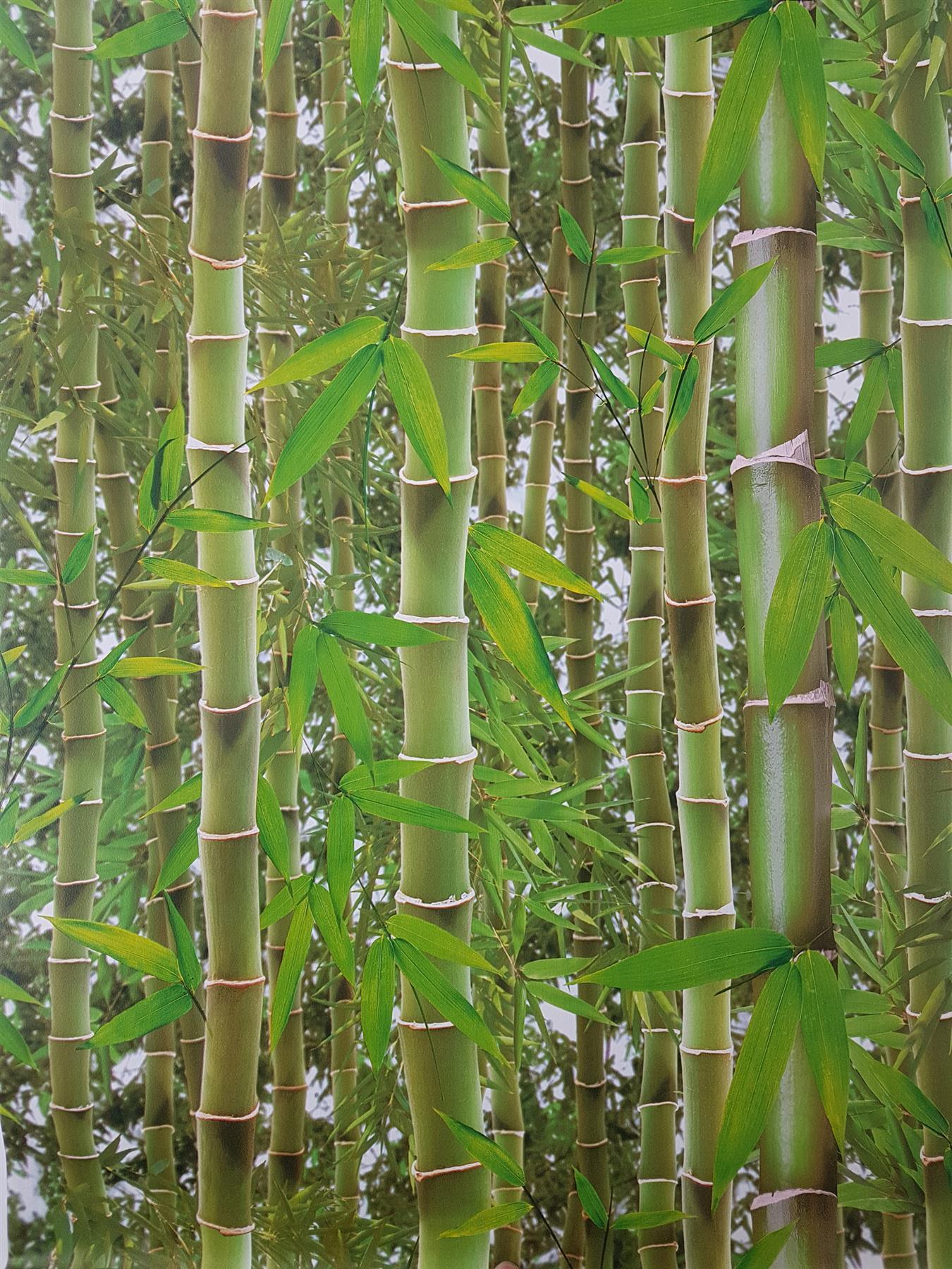 3d Effect Bamboo Forest Photo Mural Wallpaper Jungle Tropical