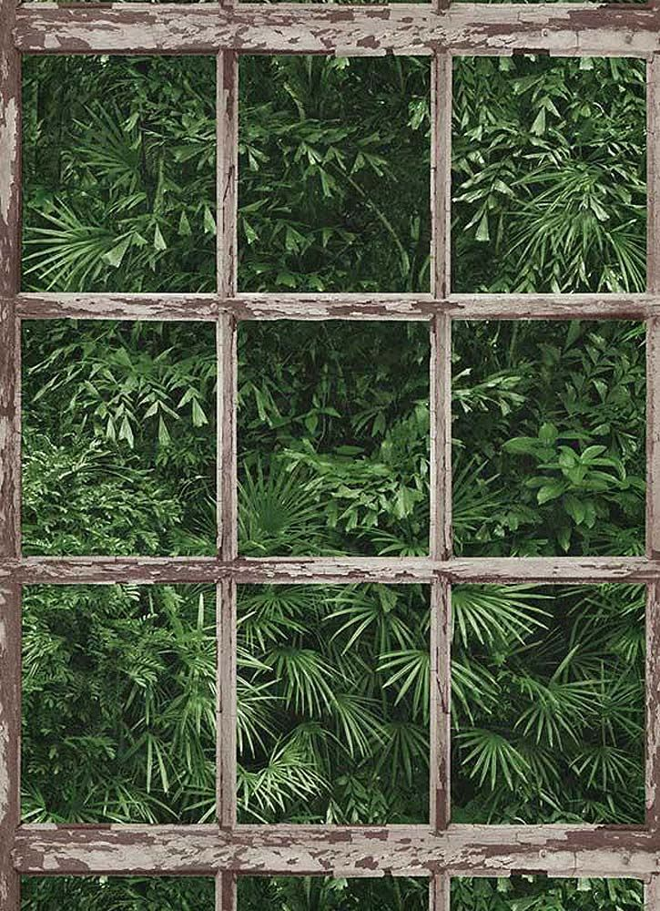 Get Jungle Wallpaper Gif