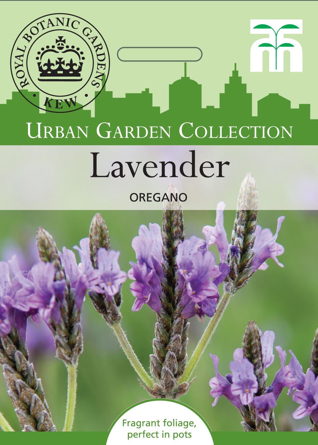 LAVANDULA ANGUSTIFOLIA alveolo Lavanda inglese 1 pianta English lavender