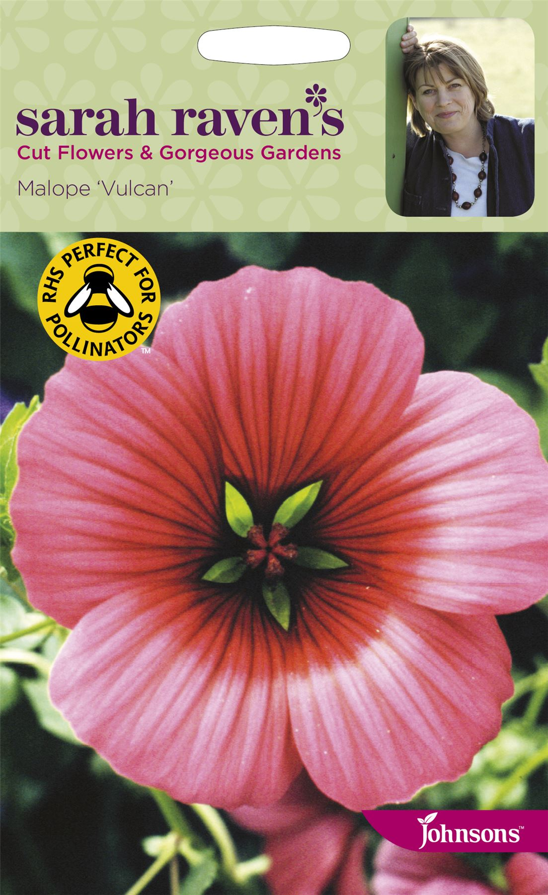 Sarah Raven Cut Flowers Malope Vulcan seed
