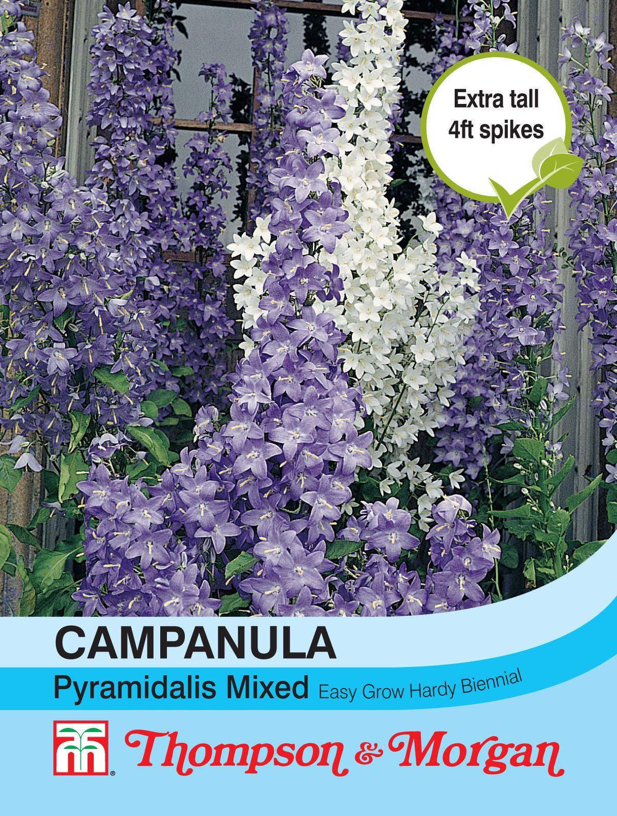Thompson /& Morgan 300 Seed Flowers Campanula Pyramidalis Mixed
