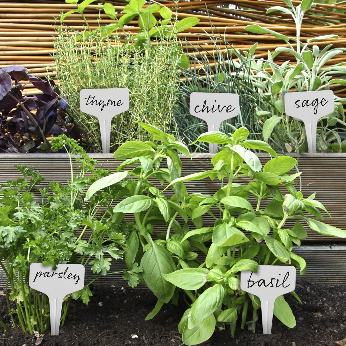 Plastic-Plant-Labels-Garden-Markers-T-Type-Gardening-Name-Tags-Herbs-Pots-White Indexbild 7
