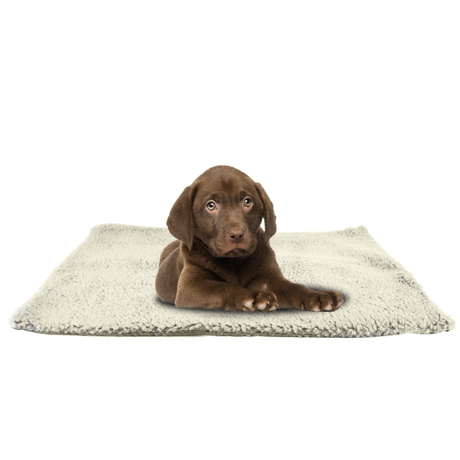 Dog On The Rug