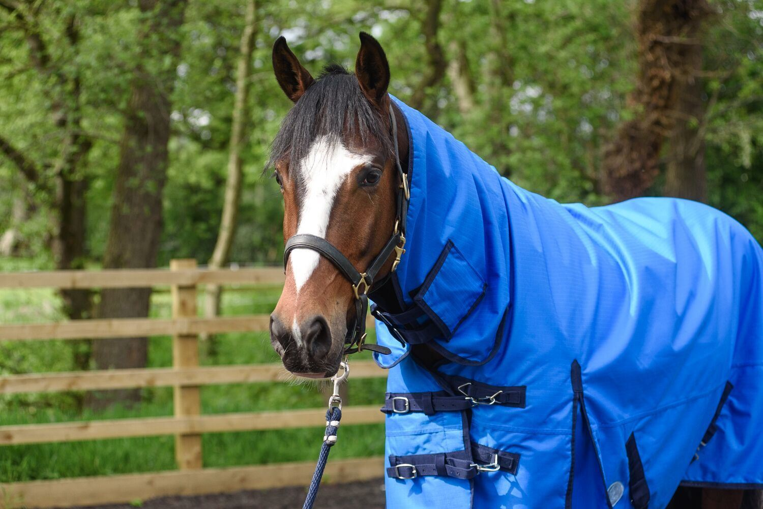 BOH-350g-Heavyweight-600D-Rip-Stop-Full-Fixed-Neck-Waterproof-Winter-Turnout-Rug thumbnail 14