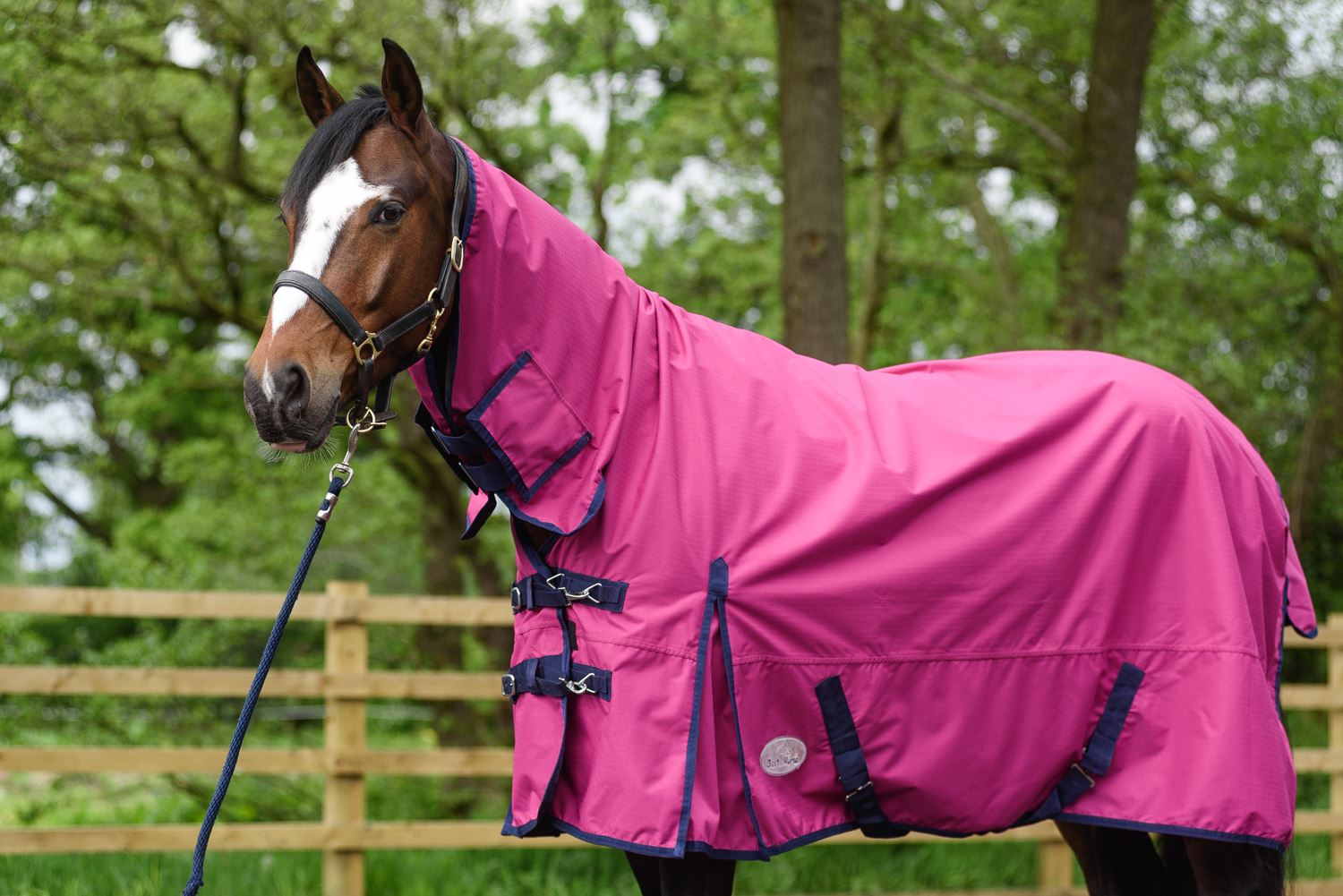 BOH-350g-Heavyweight-600D-Rip-Stop-Full-Fixed-Neck-Waterproof-Winter-Turnout-Rug thumbnail 41