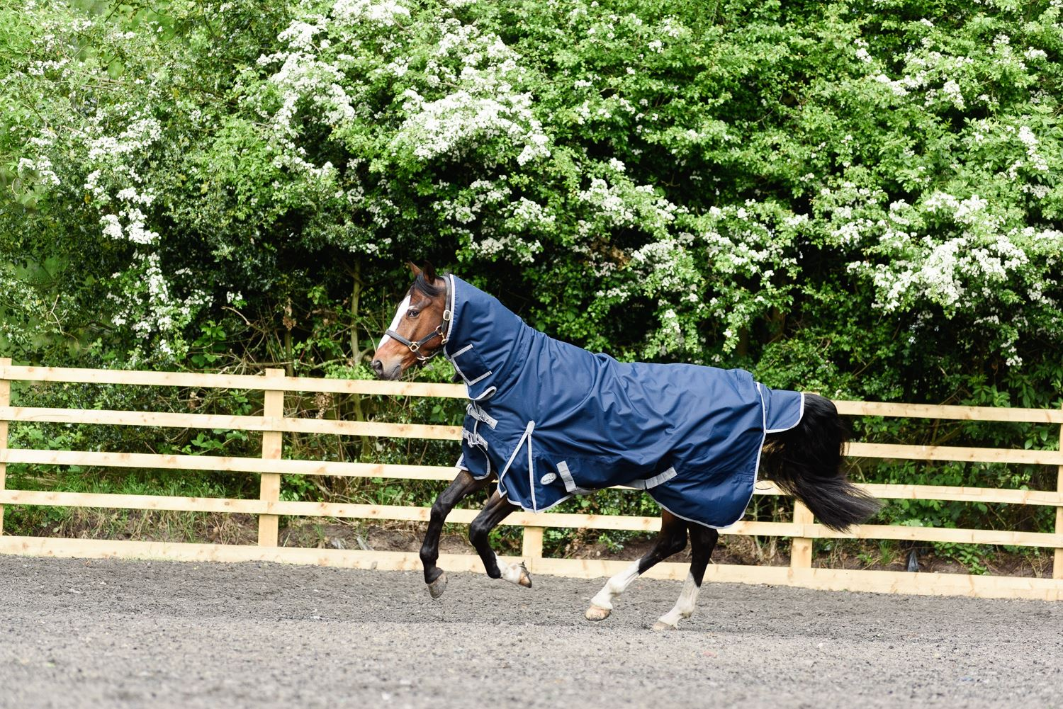 BOH-350g-Heavyweight-600D-Rip-Stop-Full-Fixed-Neck-Waterproof-Winter-Turnout-Rug thumbnail 24