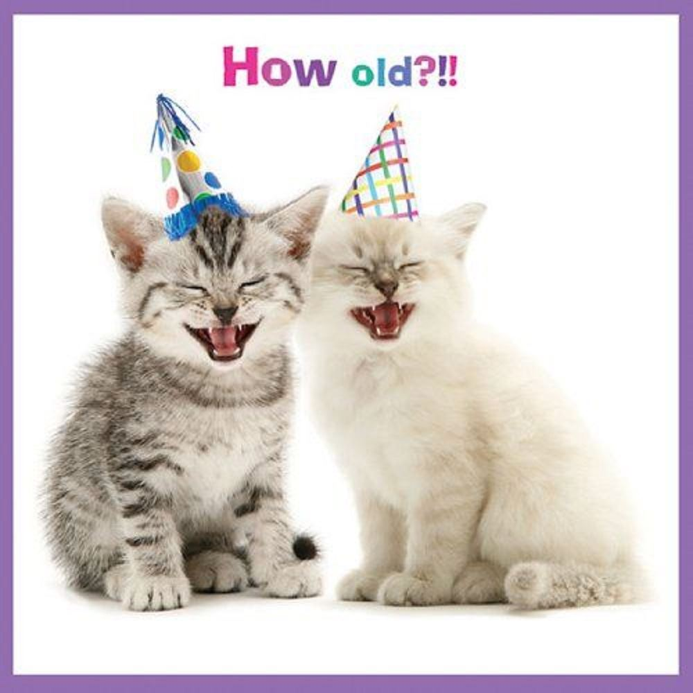 Cute Pets Animals Funny Birthday Thank You Blank Greeting Cards All