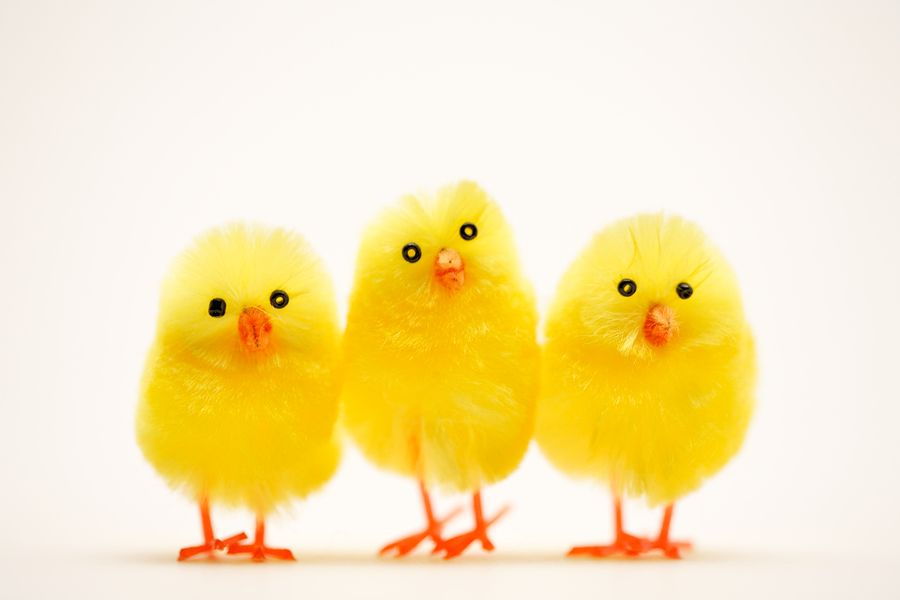 Yellow Multi-colour Easter Chick Chicks Decorations ...
