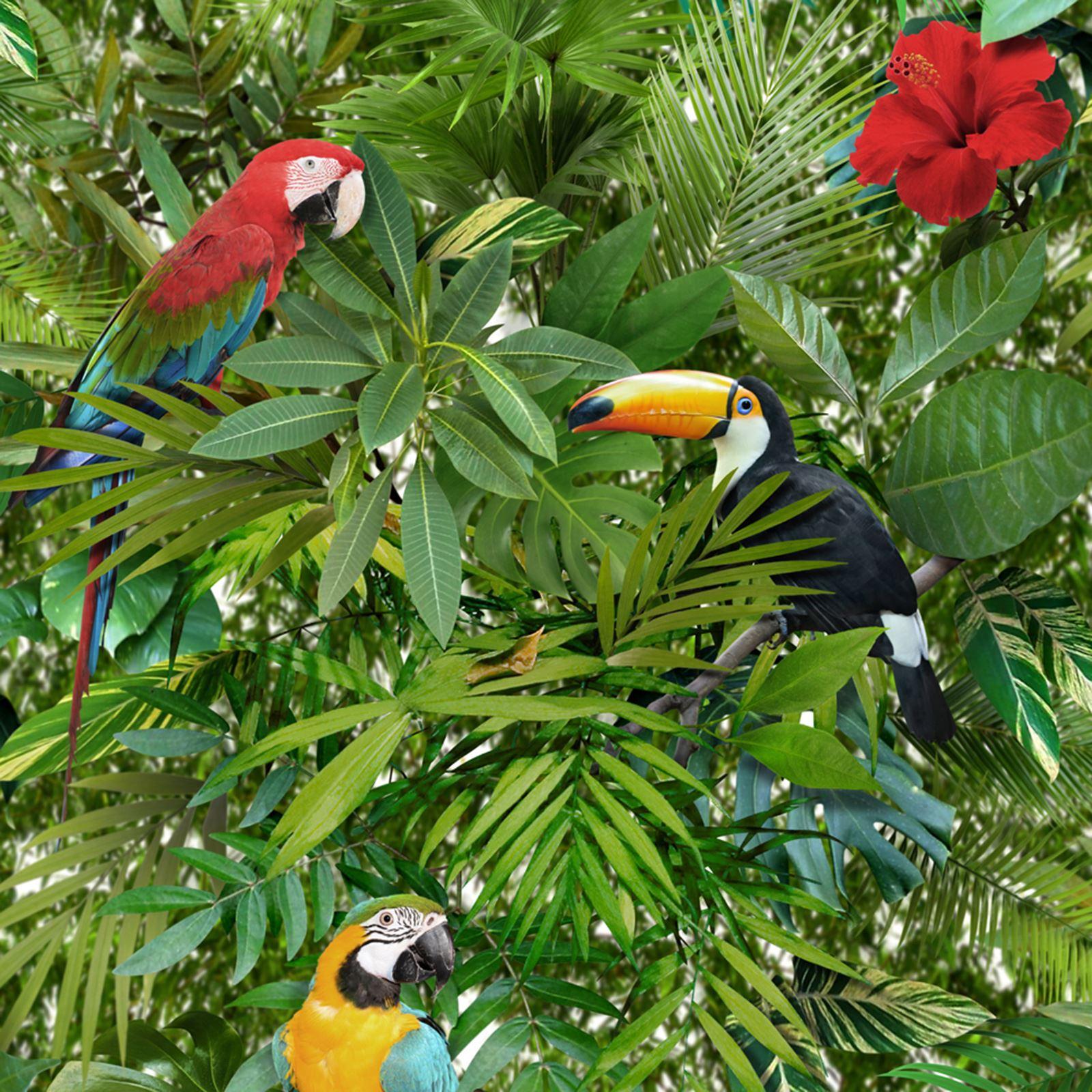 Exotic Birds Wallpaper Ebay