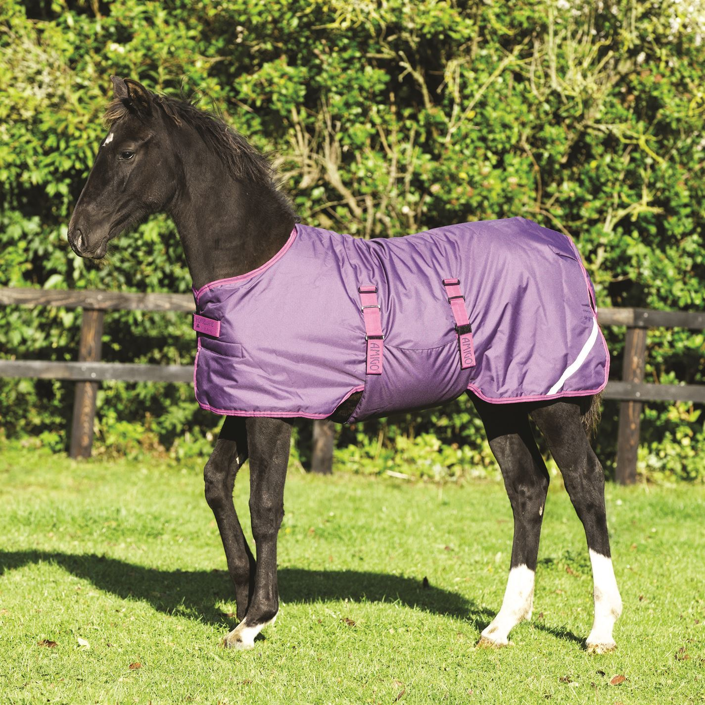 Amigo Foal Horses Rug Horses Foal Riding Body Cover Accessory b5b13c