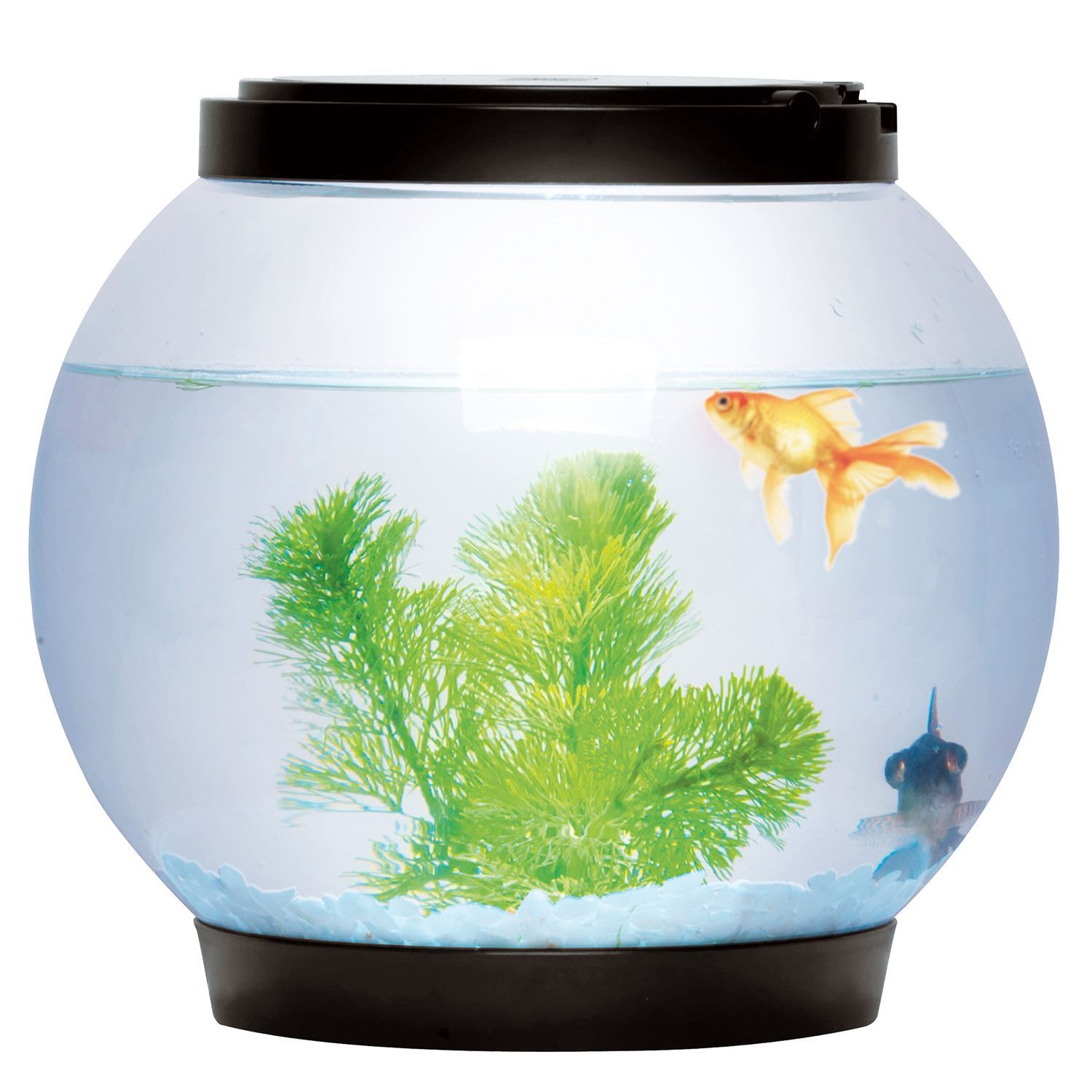 Round glass goldfish fish bowl tank with colour led light for Circular fish tank