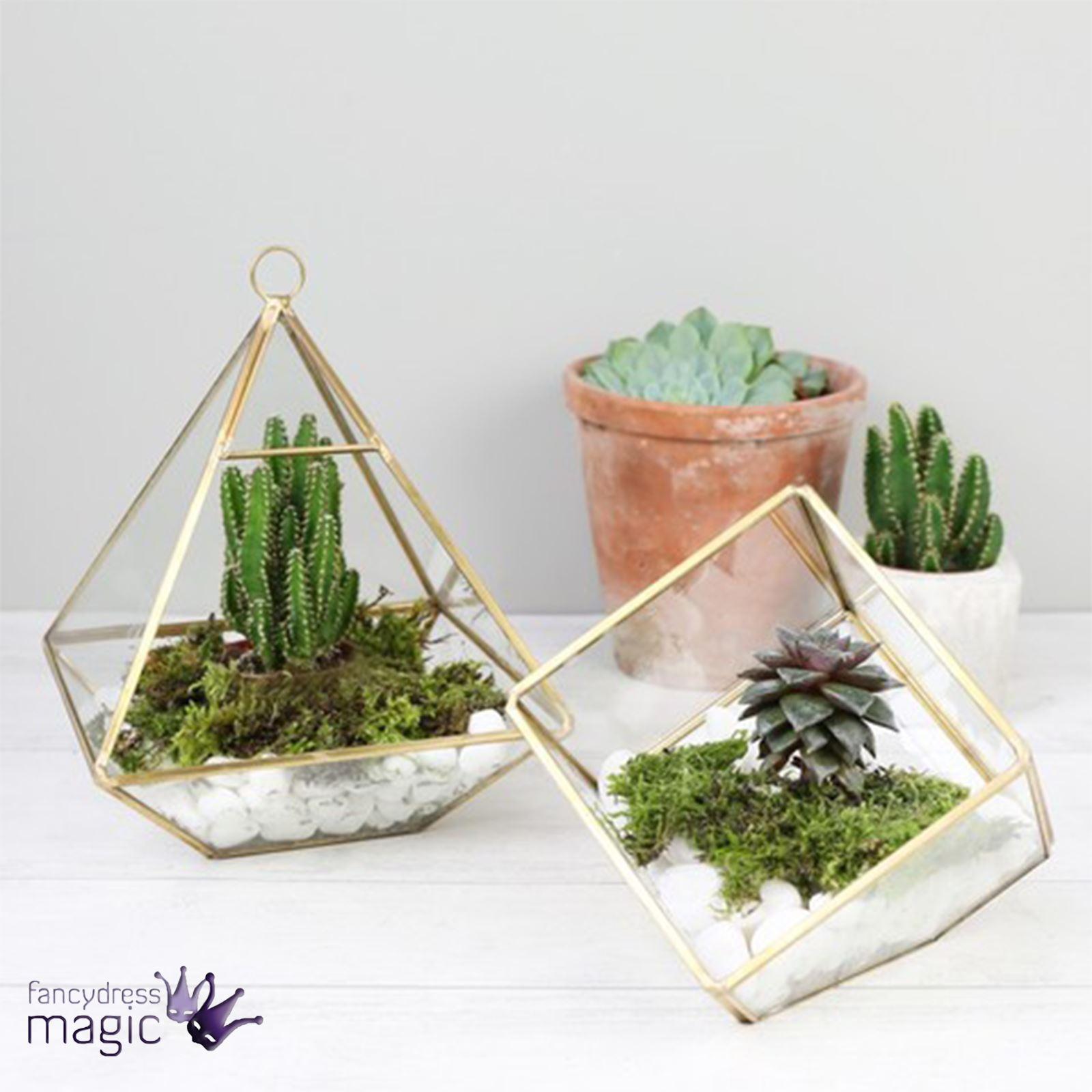 Sass Belle Hanging Terrarium Geometric Gold Glass Succulent
