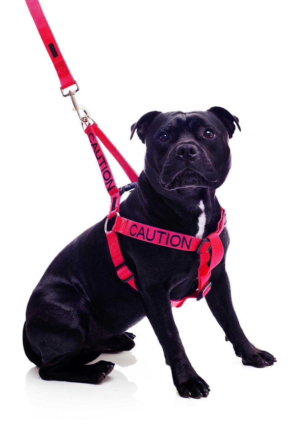Warning Colour Coded Dog Collars Harness Lead Leash Collar
