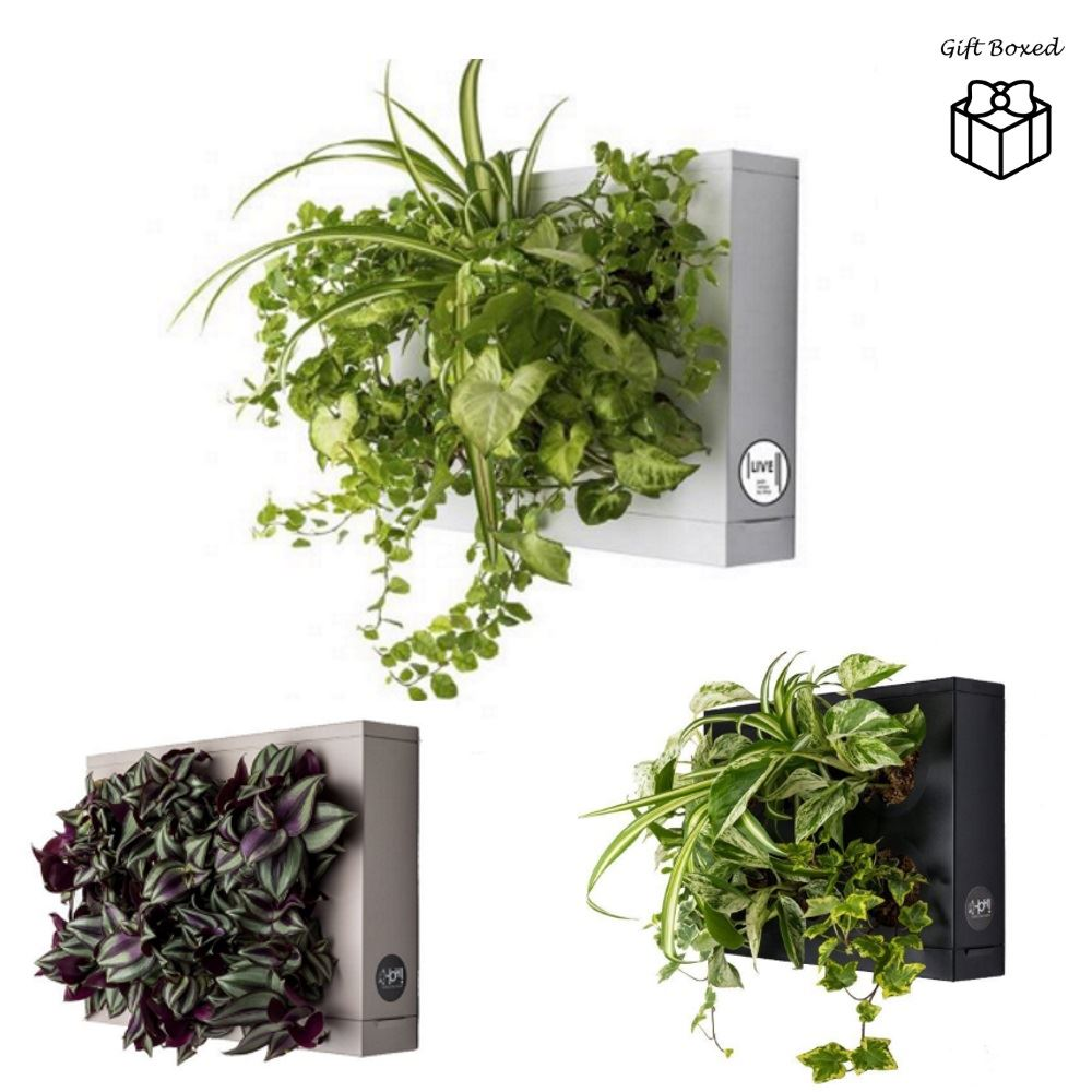 Judge Pot Holders: Hoh Indoor And Outdoor Wall Mounted Hanging Multi Plant
