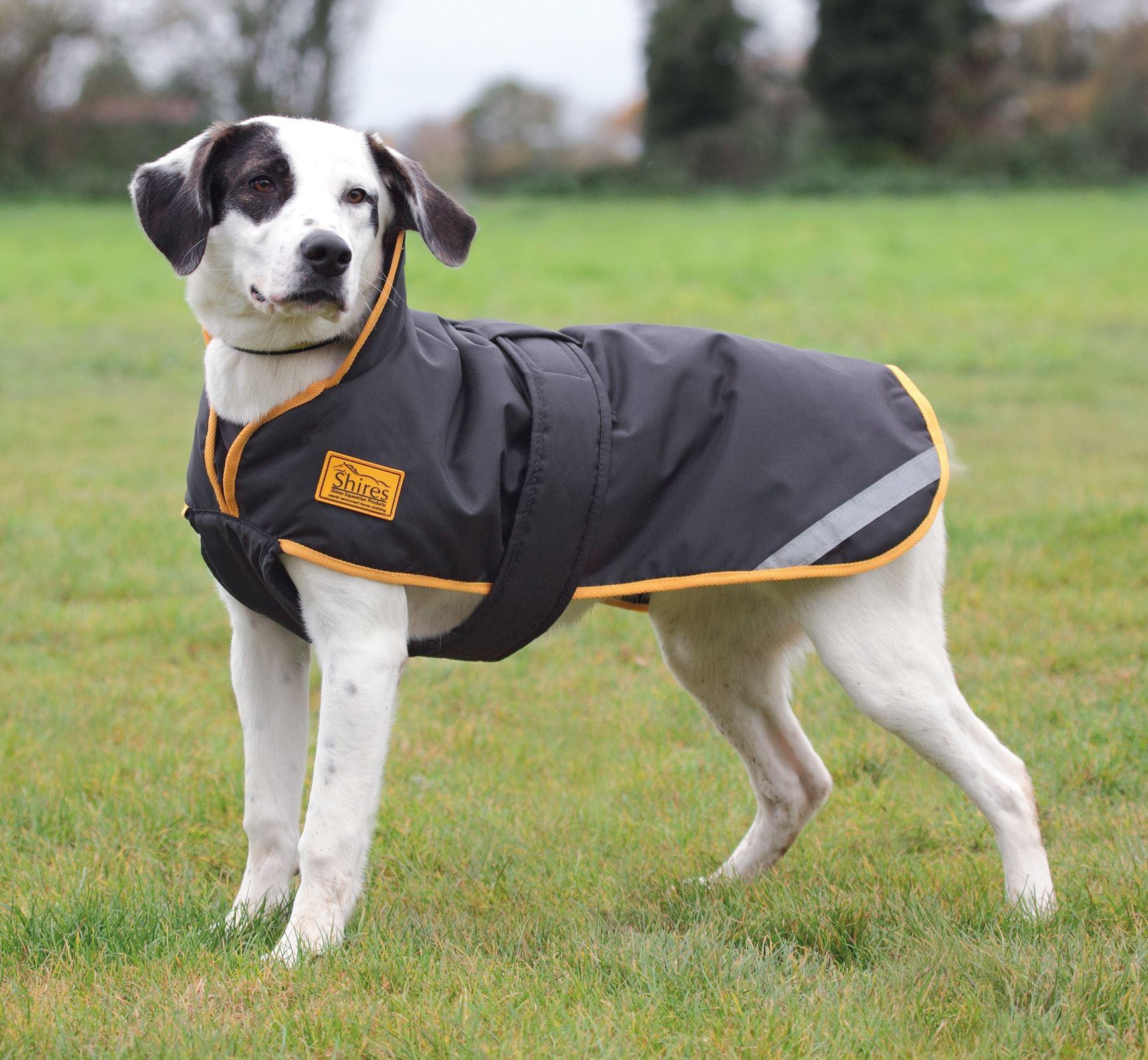 Black Gold Stormbreaker Dog Coat