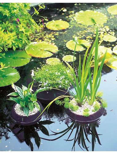Velda floating plant island basket aquatic pond lily marsh for Planter fish pond