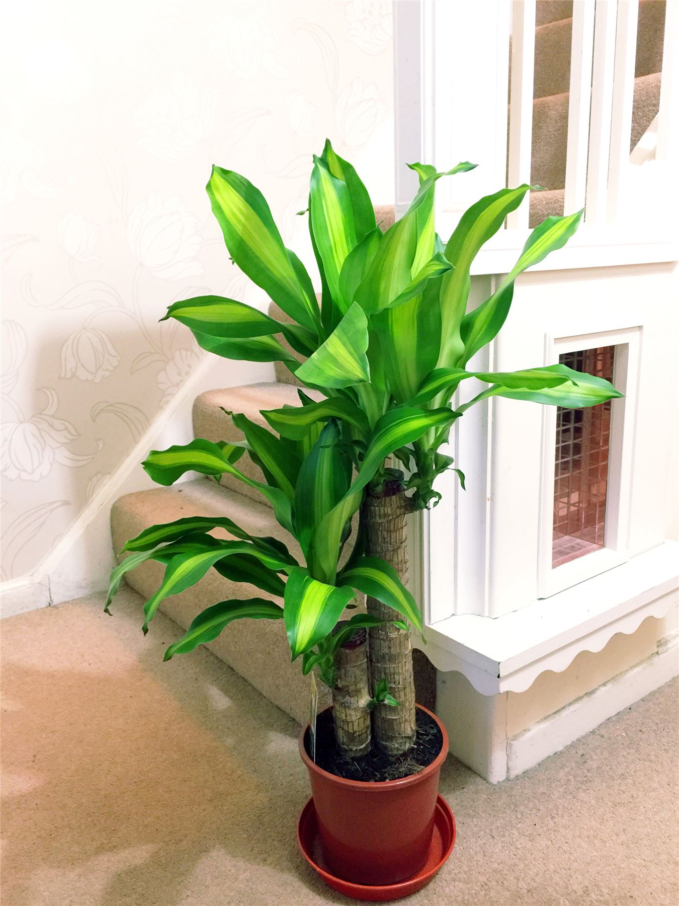 1popular evergreen indoor house plant pot office home for Evergreen house