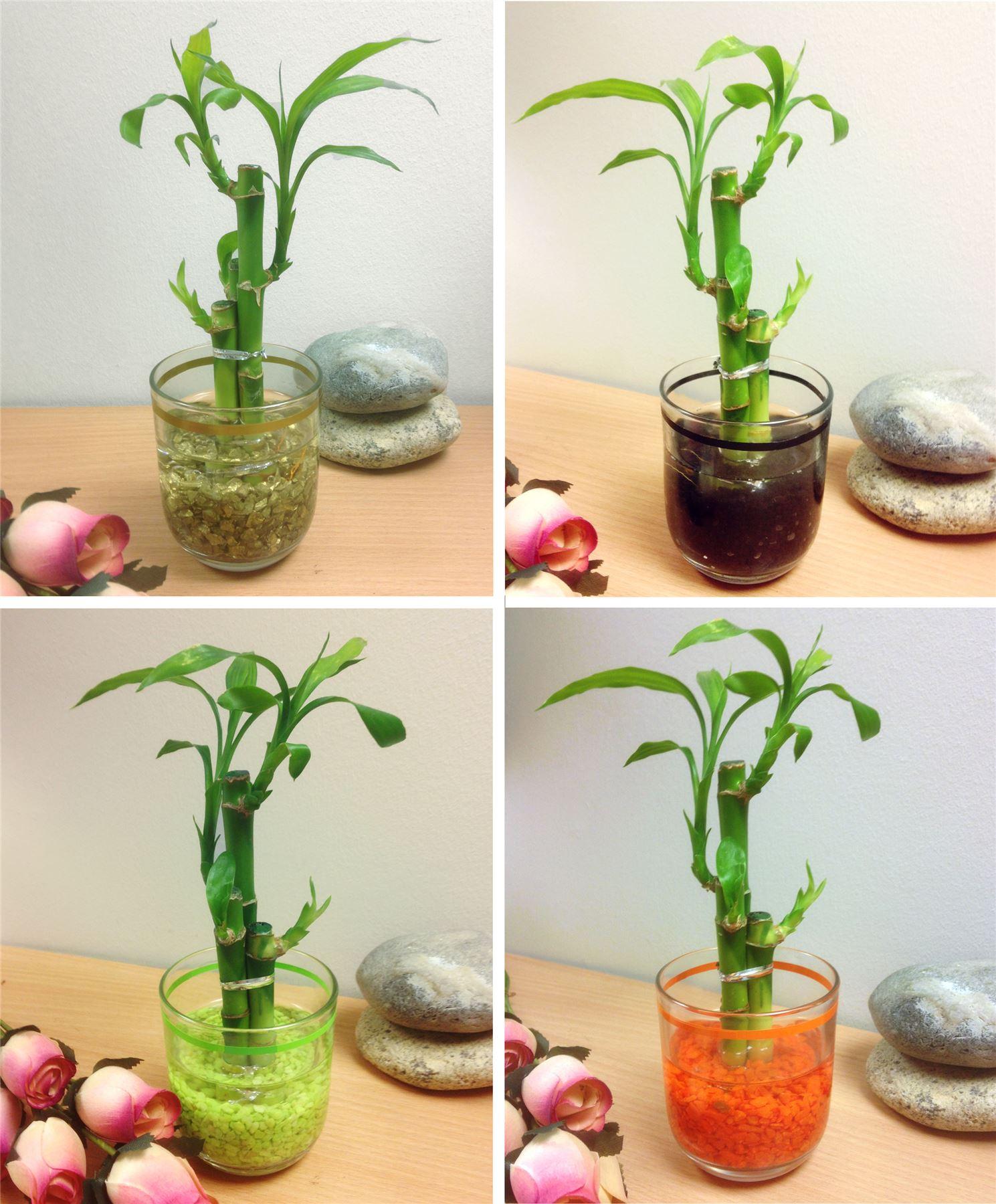 Objet Feng Shui 1 pot de bambou porte-bonheur en verre coloré vase house plant feng