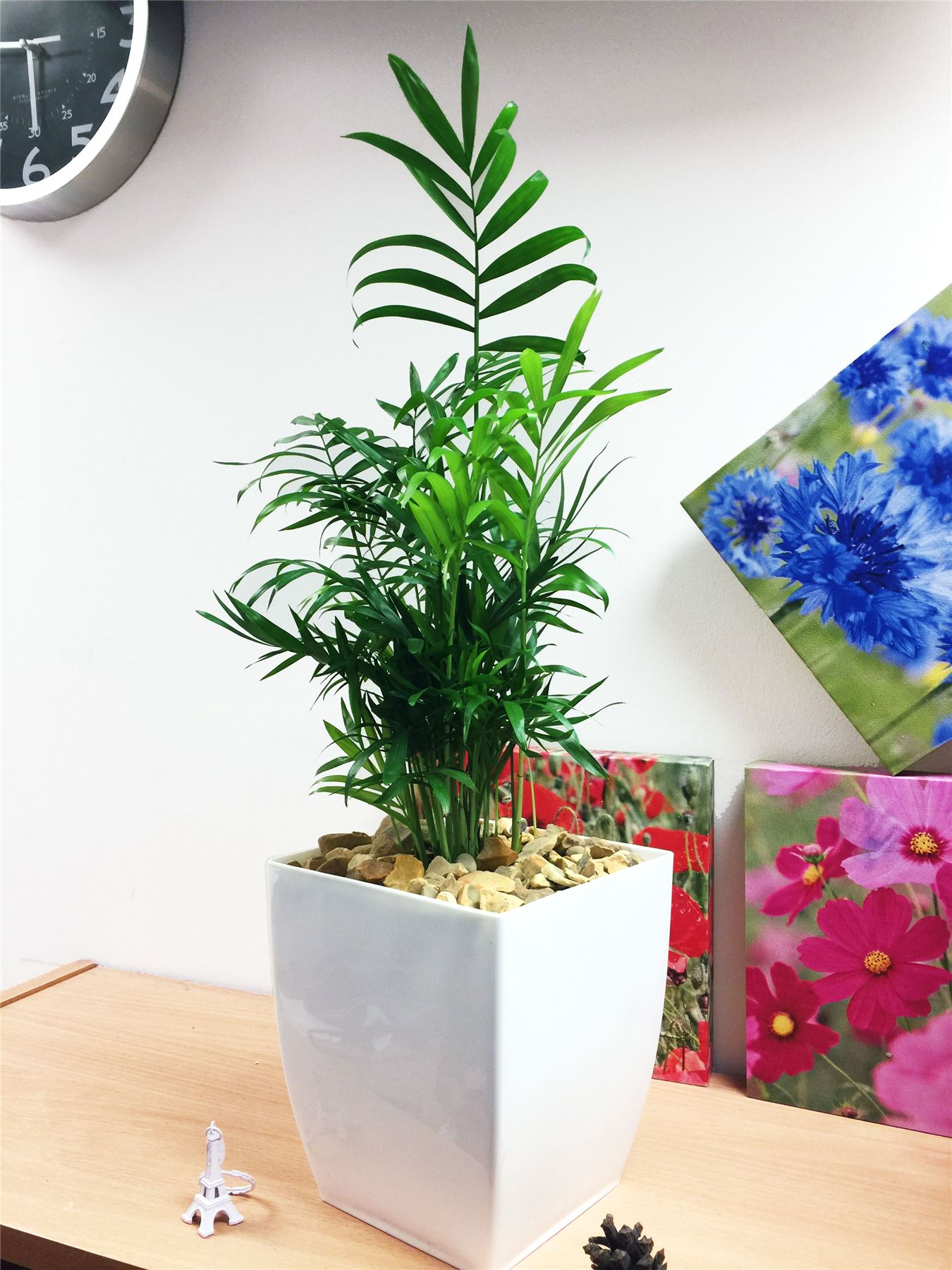 evergreen table plant in gloss white milano pot patio