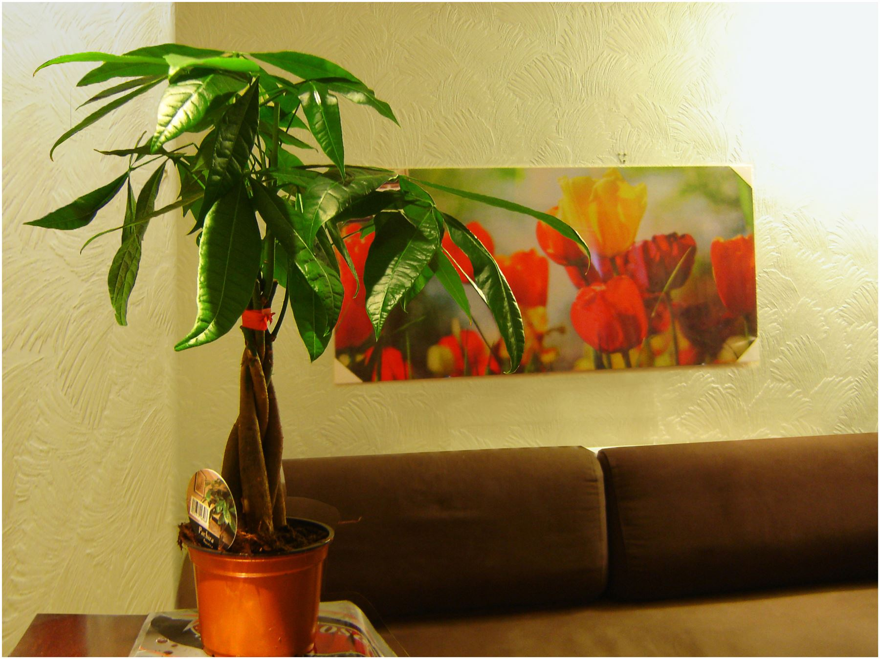 Piante Ufficio Ossigeno : Pot of tabella delle piante da interno casa ufficio giardino