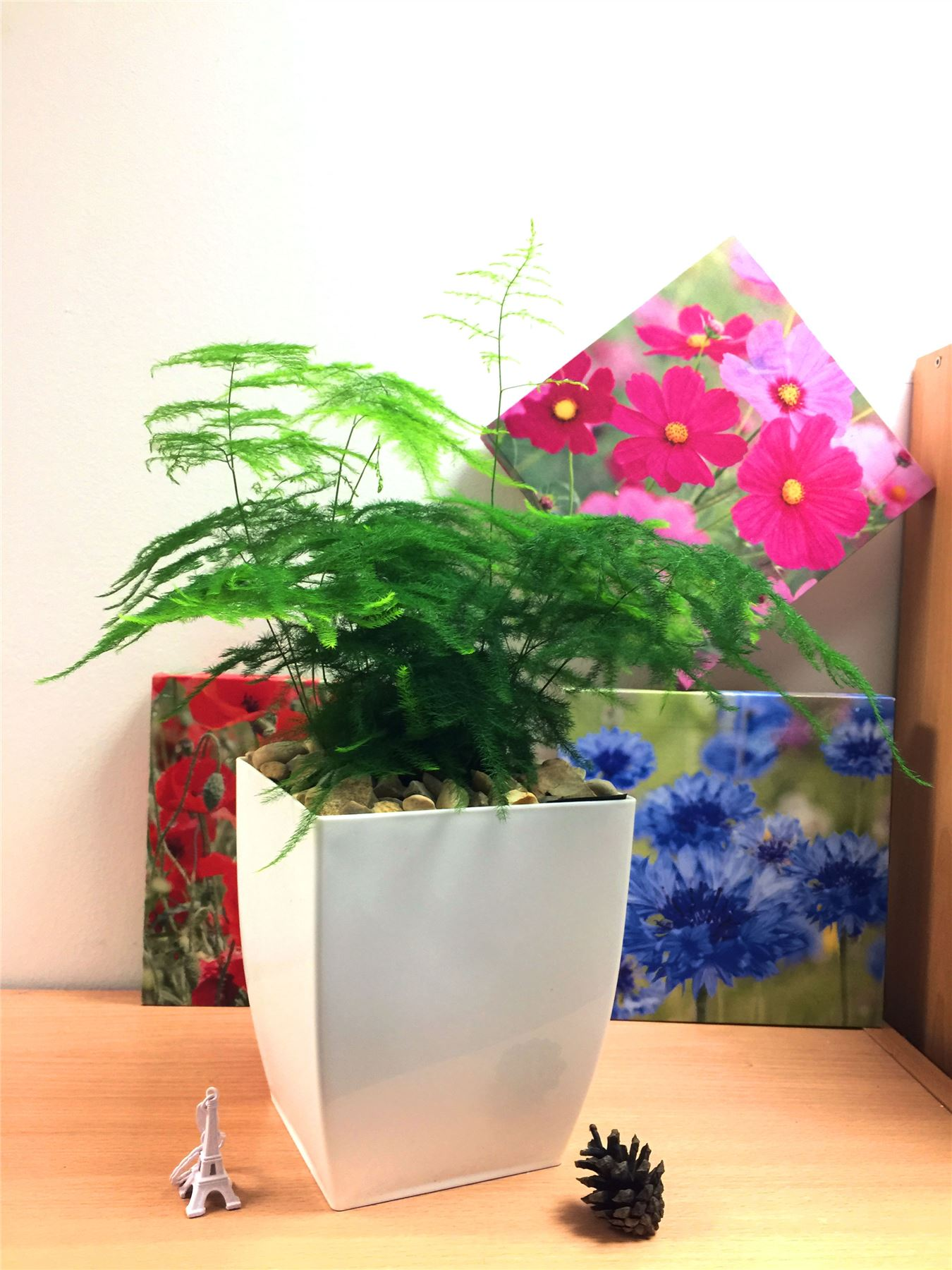 indoor plants for more oxygen
