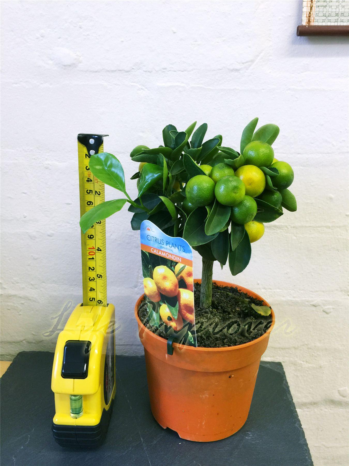 Jardin, terrasse > Plantes, graines, bulbes > Plantes, jeunes pousses ...