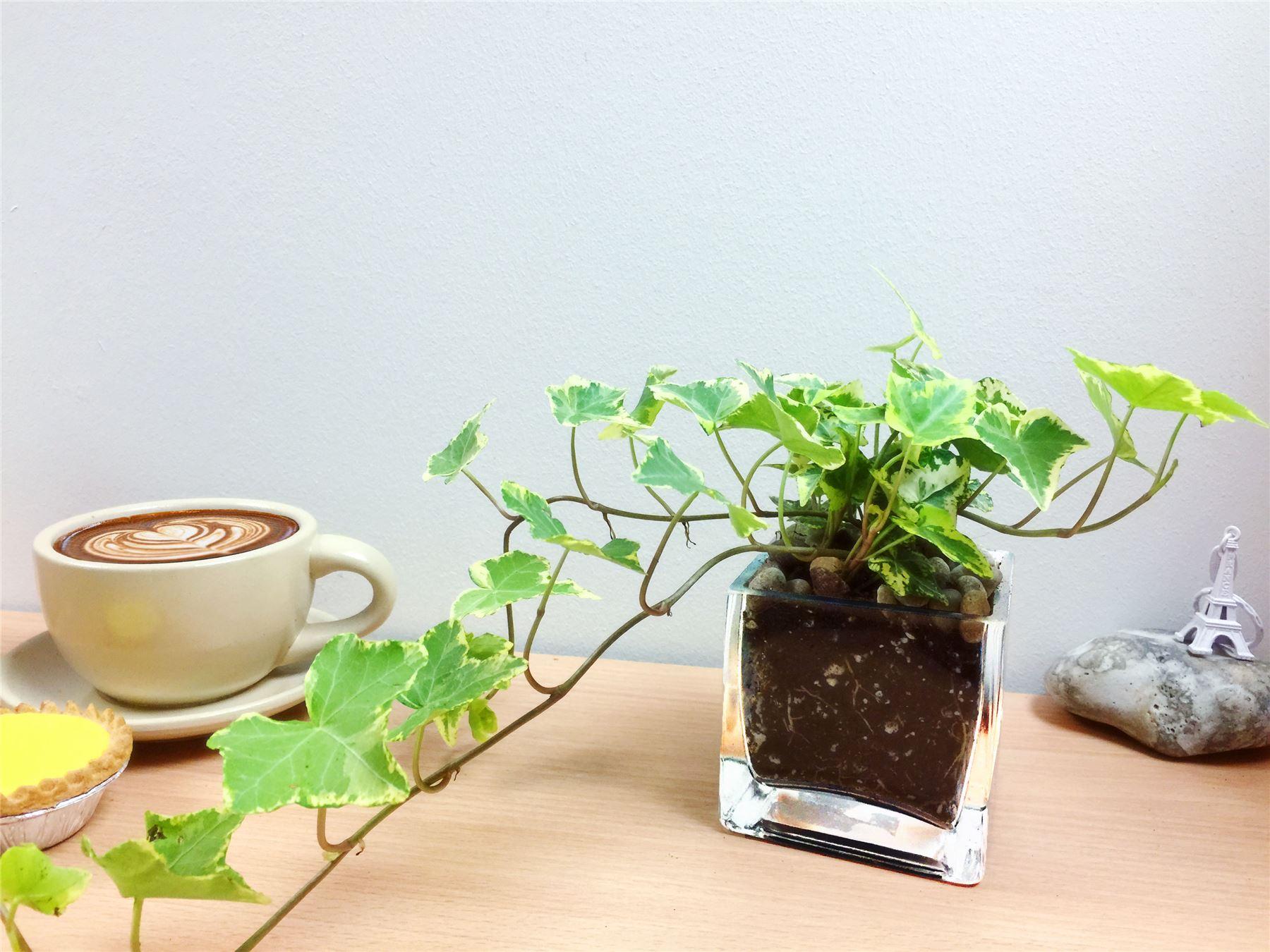 Piante Ufficio Ossigeno : Come purificare l aria di casa con le piante la stampa