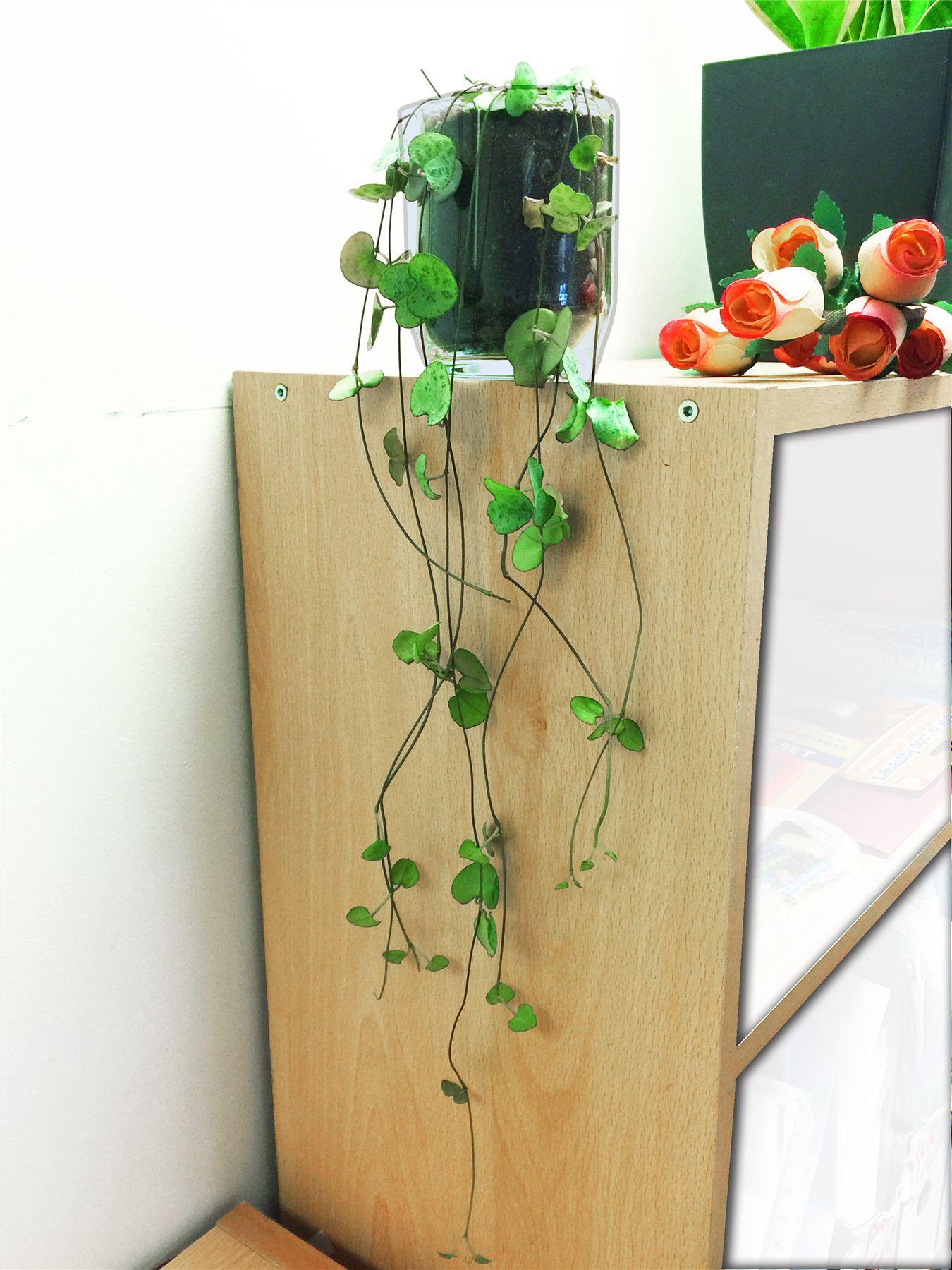 Chaine De Coeurs Succulente Cactus Plante D Interieur En Verre Pvc