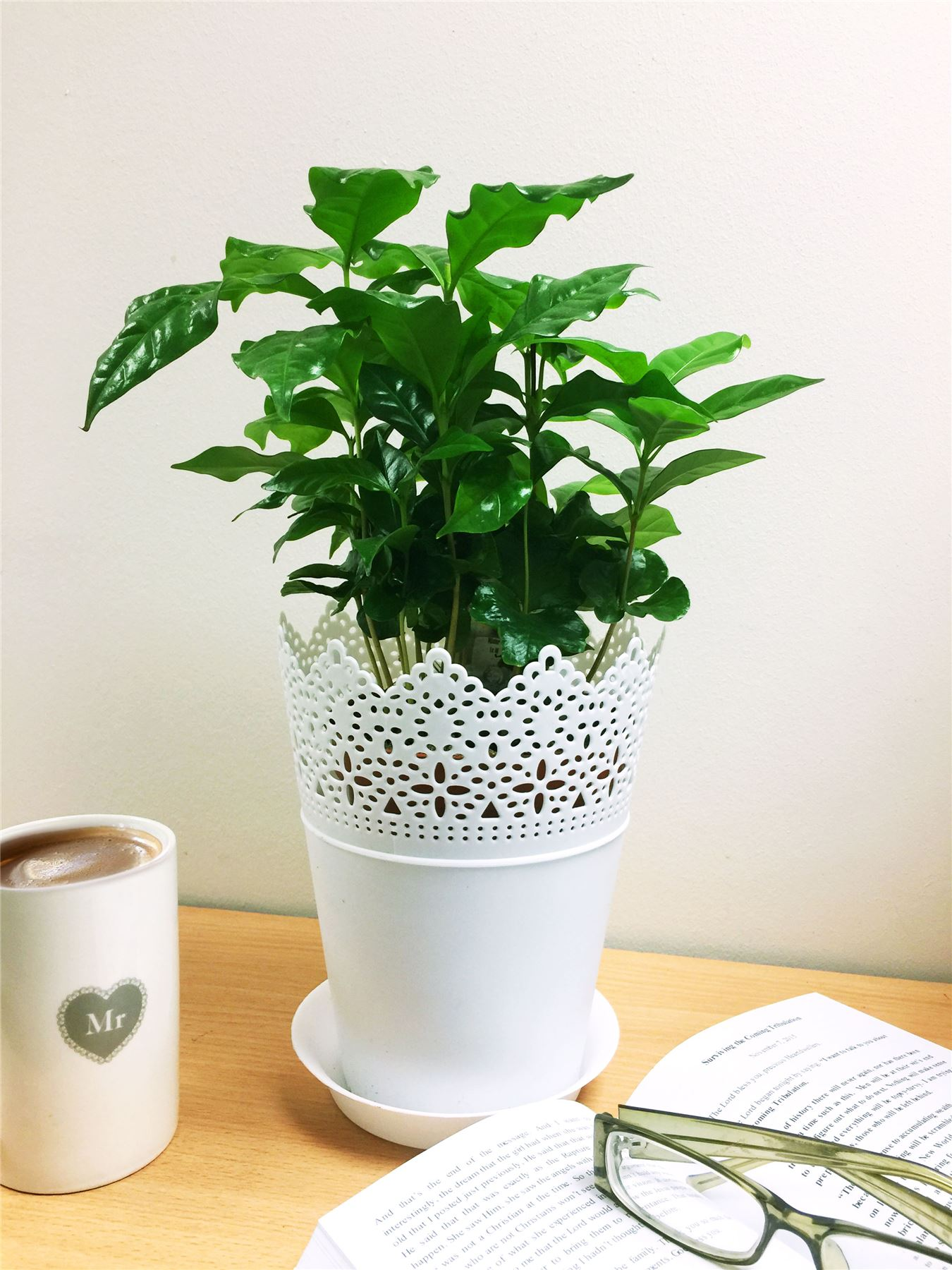 how to take care of a coffee plant