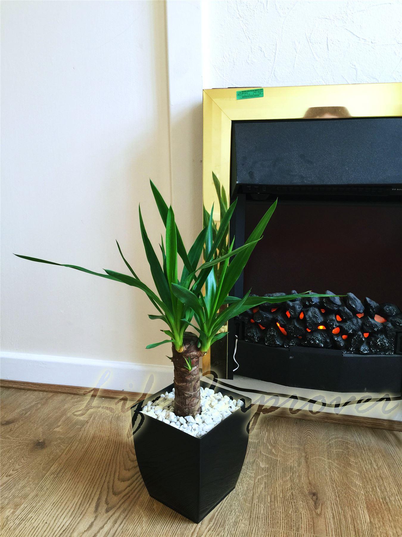 office house plant in square milano gloss black pvc pot