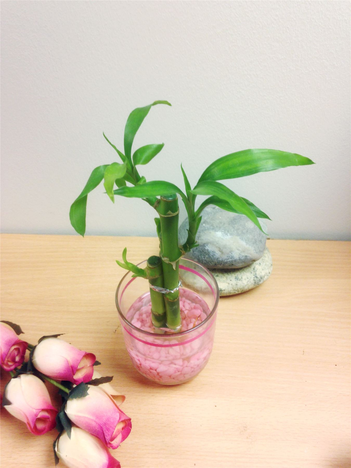 1 pot of lucky bamboo in colourful glass vase house plant feng 1 pot of lucky bamboo in colourful glass reviewsmspy