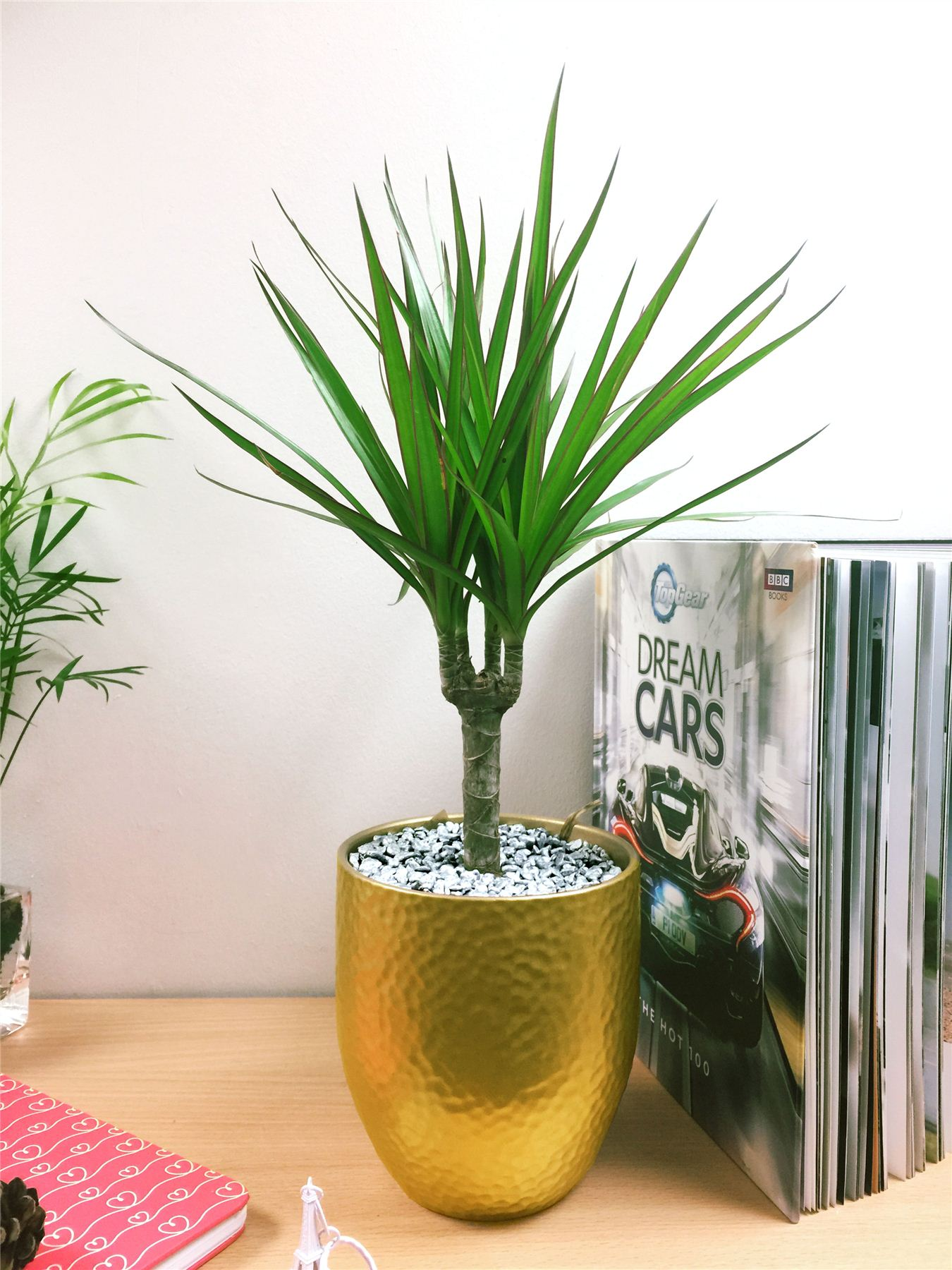 Evergreen Table Plant Gold Ceramic Pot Silver Top