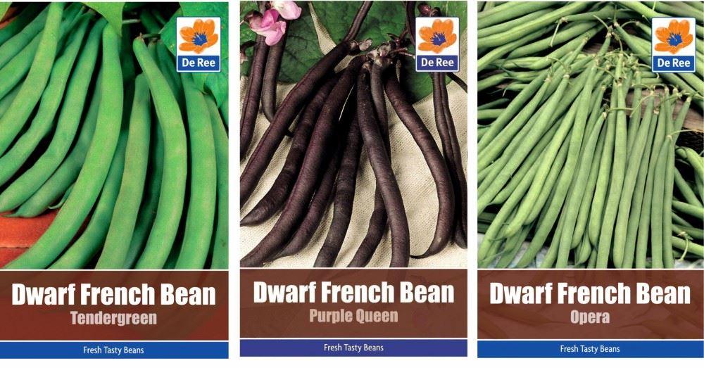 1 Lb Tendergreen Improved Green Bush Bean Seeds Everwilde Farms Mylar Packet