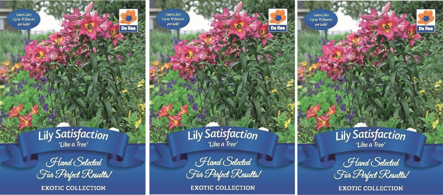 6 x lily like a tree satisfaction garden summer flowering bulbs ebay 6 x lily like a tree satisfaction garden summer flowering bulbs izmirmasajfo