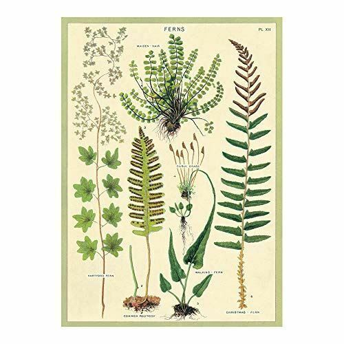 Cavallini Fern Poster, Retro Wall Art Print, Botanica Craft Poster, Decoupage, Luxury Wrapping Sheet, Vintage Wall Decoration