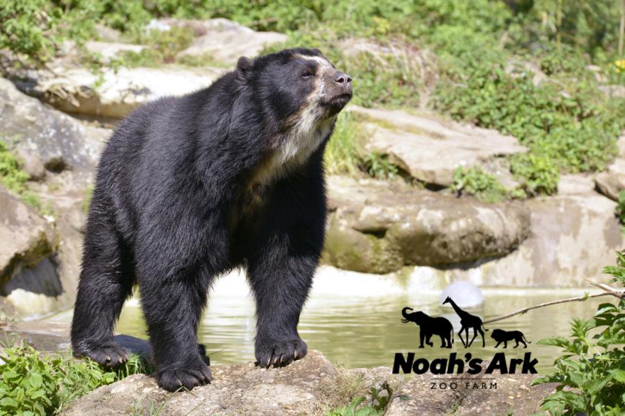 Andean_Noahs Ark Zoo