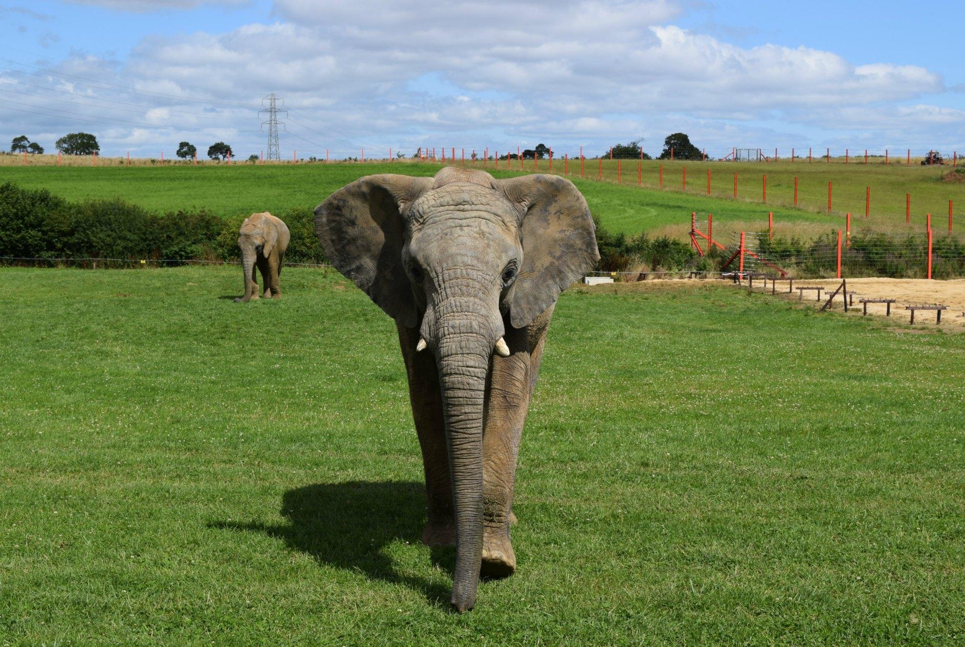 Elephants J+M 2015e