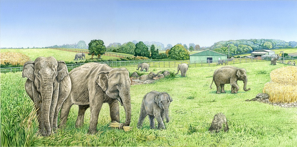elephants uk