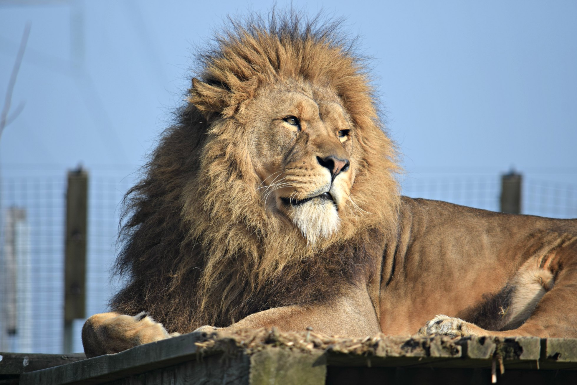 NAZF Lion spring2015