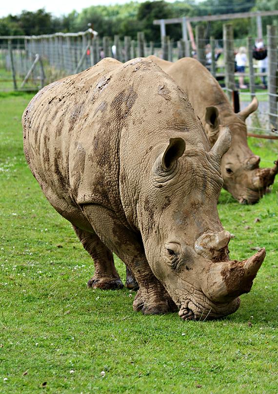 Noahs Ark Zoo Farm Rhino