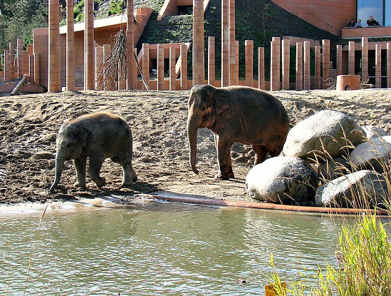 Elephant Eden bathing pools