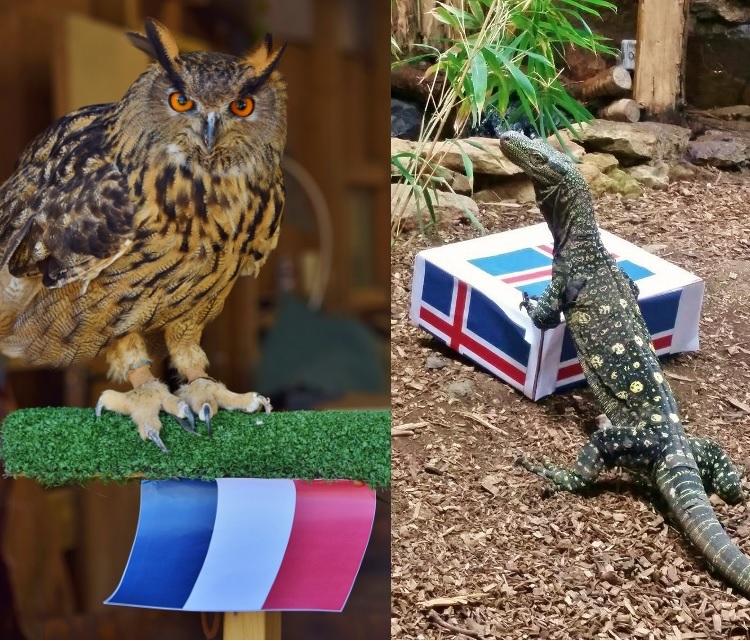 Owl Monitor