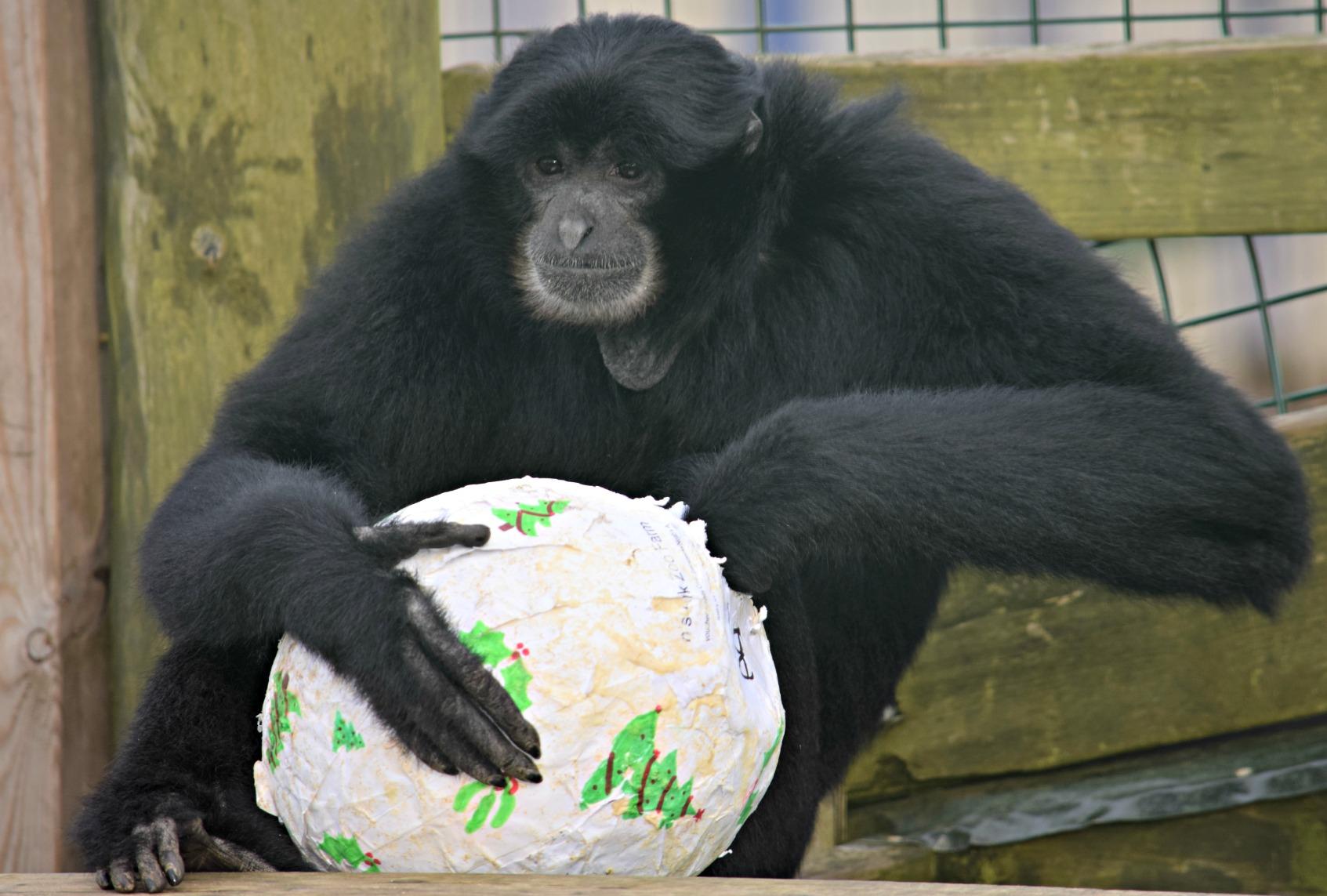 primates_xmas14 A