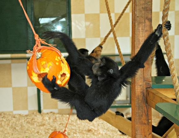 Halloween at Noah's Ark Zoo Farm