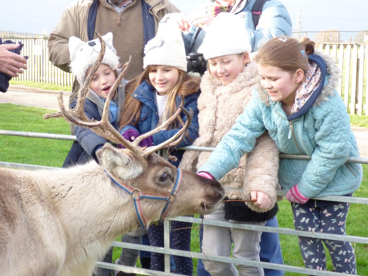 reindeer-small