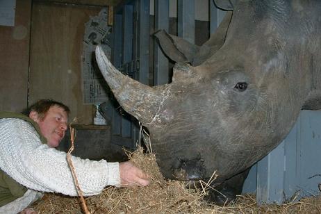 Rhino uk