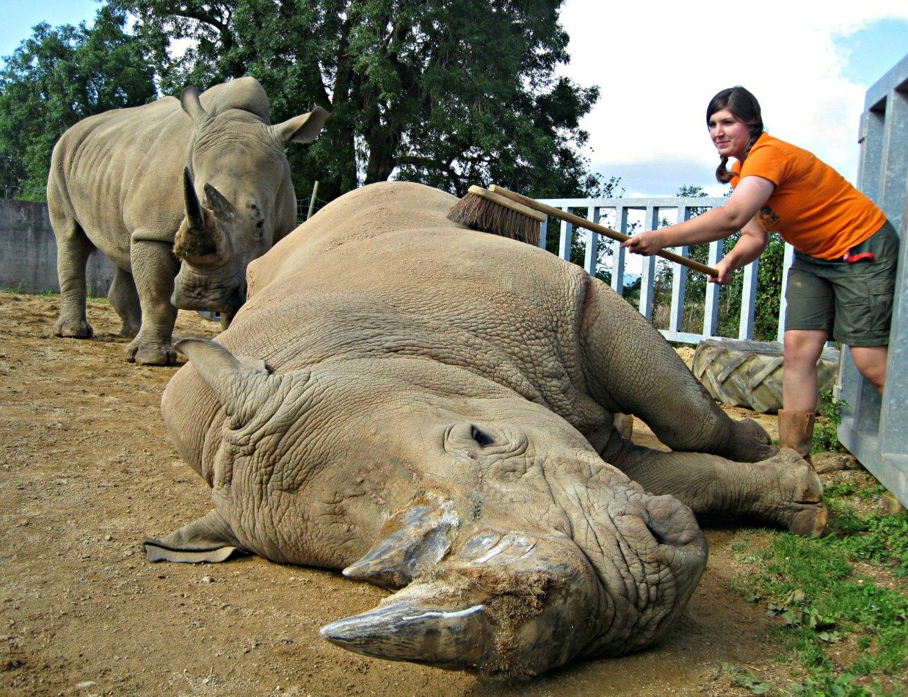 Rhinos_Emma Green