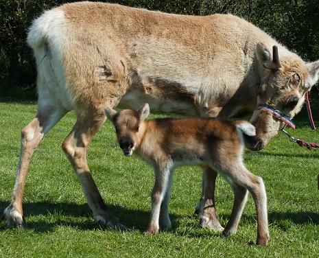 reindeers in Bristol